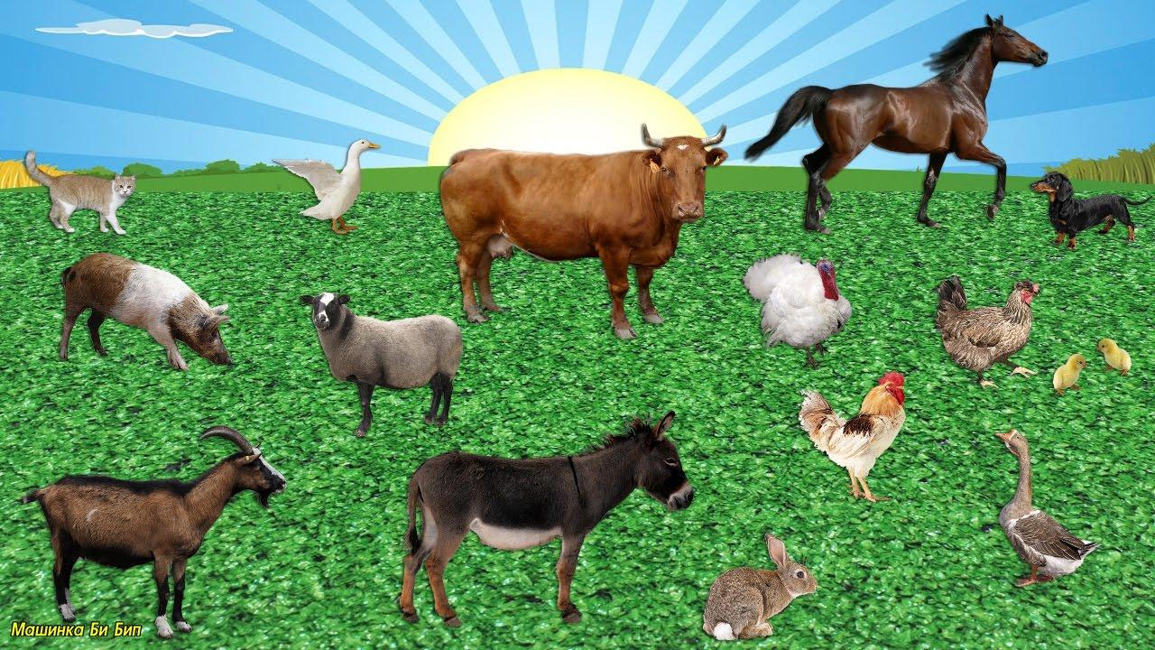 Знаете ли Вы идиомы о животных?